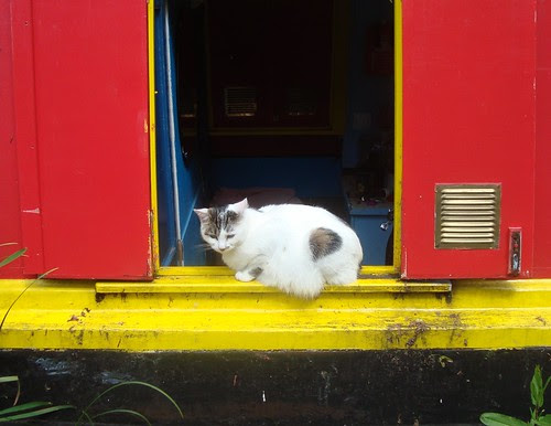 houseboat cat