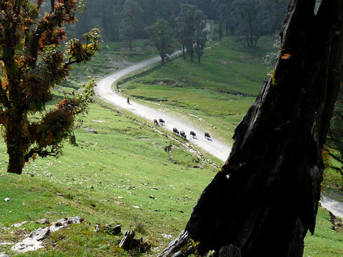 chopta cowdust