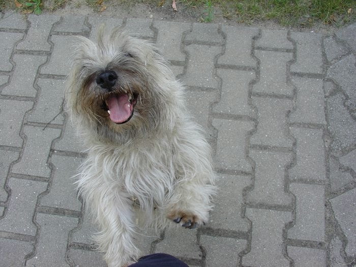 happiest_dogs_on_the_internet_01 (700x525, 163Kb)
