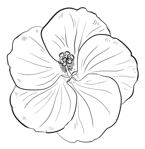 Fiori Hawaiani Disegni.Disegni Da Colorare Di Fiori Di Ibisco Coloratutto Website