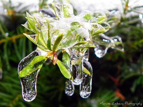Ice Rain (4)