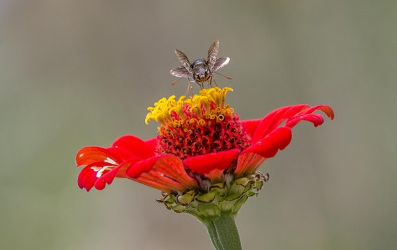 Las abejas tienen un sistema visual más afinado hacia el espectro azul. FOTO juan antonio sánchez