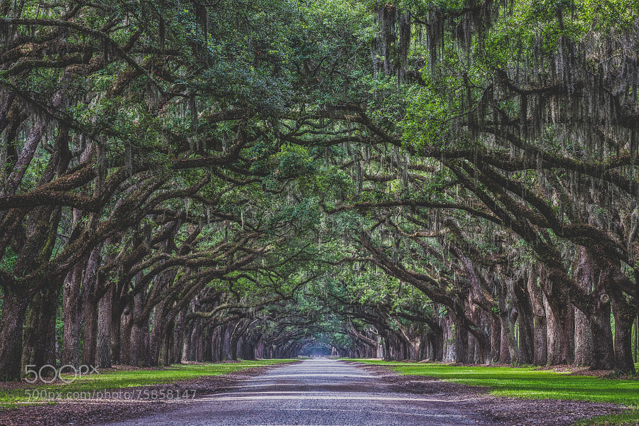 Photograph Oak Ave by Chilehead Craig on 500px