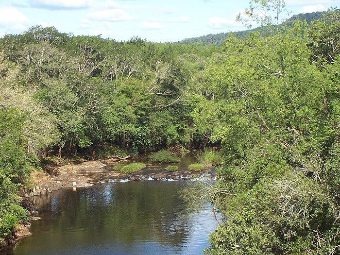 misiones, selva, cataratas