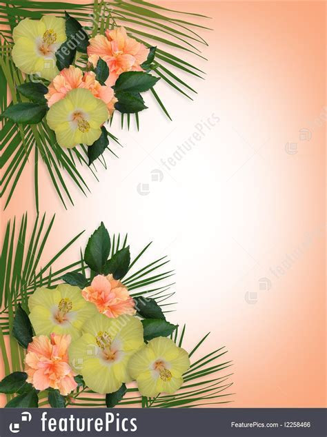 Templates: Tropical Hibiscus Flowers Border   Stock
