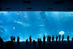 黒潮の海, 沖縄美ら海水族館