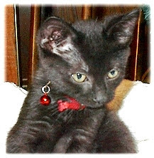 Remembering this little man-cat...Ernie