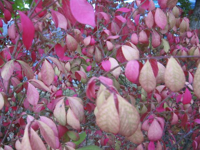 foliage_shrub