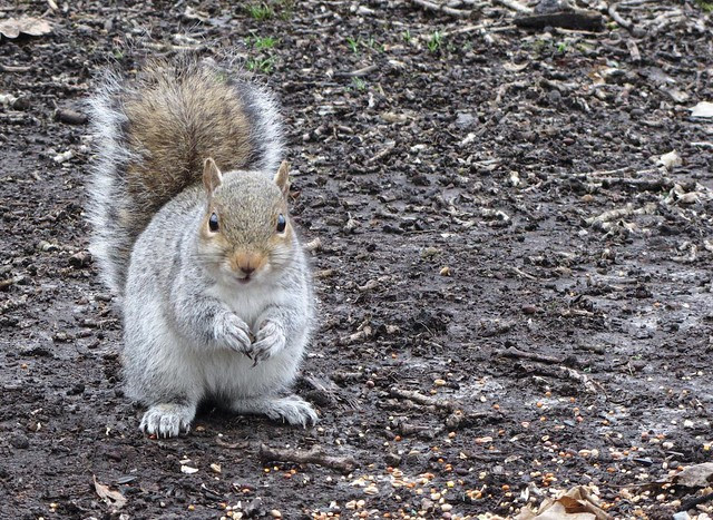 IMG_3355 squirrel