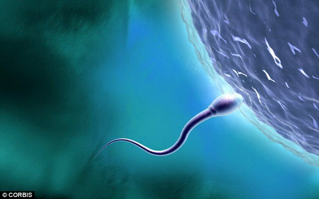 Dr Zietsch explained the evolutionary reason why we engage in lengthy penetration may be because  the ridge of a penis scoops out existing sperm from the vagina. This allows that particular man's sperm to reach the egg