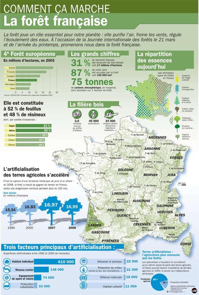 W lesie - francuski las 3 - Francuski przy kawie