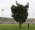 Resultat d'imatges de campo de futbol co un arbol