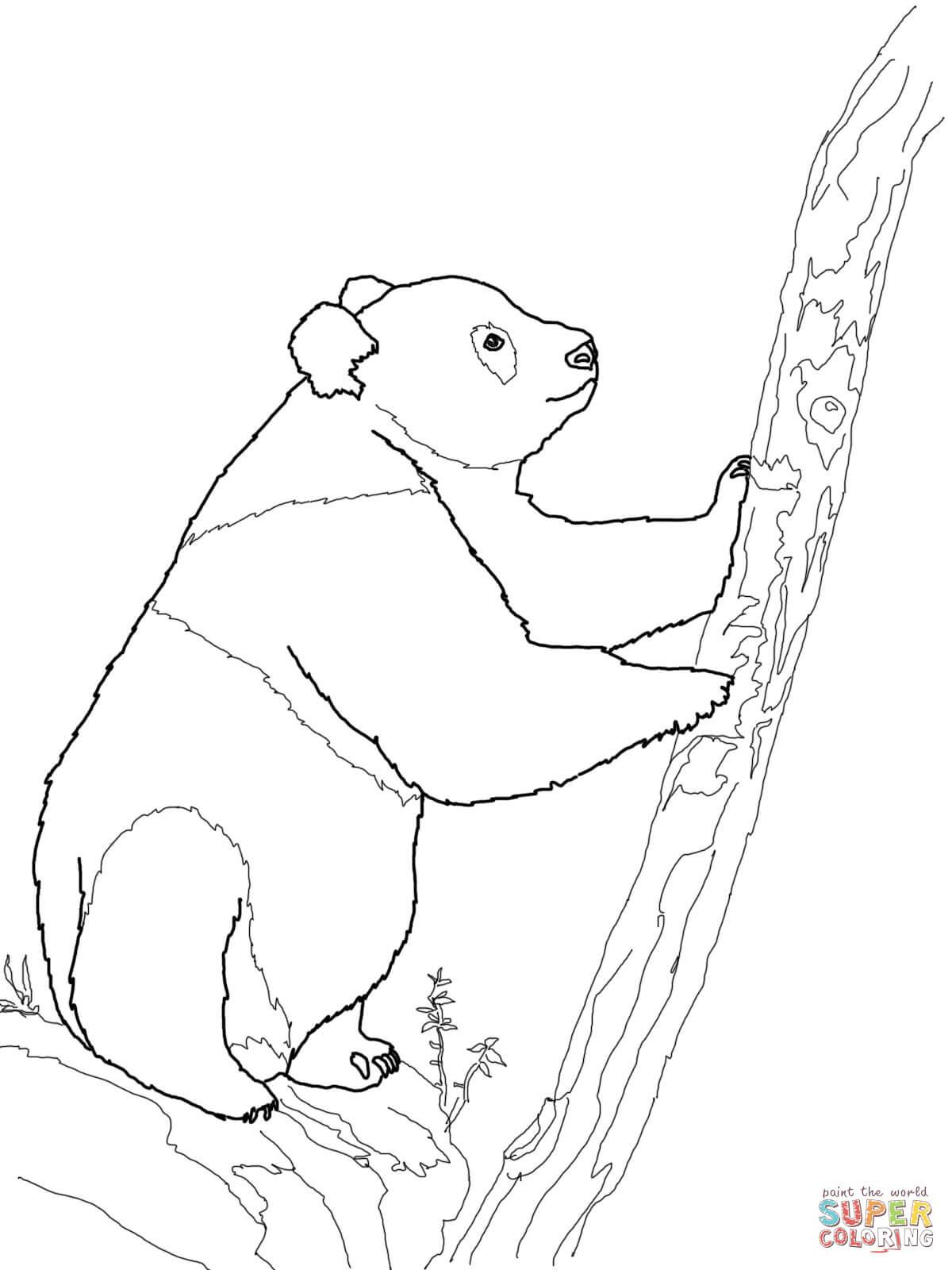 Dibujo De Oso Panda Gigante Para Colorear Dibujos Para Colorear