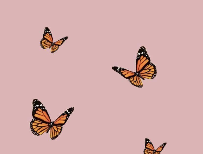 Yellow Butterfly Wallpaper Aesthetic Flowers - Wallpaper