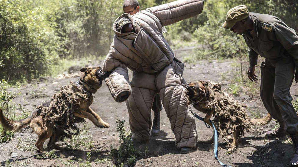 Ranger trainees and trainee dogs at the Paramount Group Anti-Poaching training and K9 academy in Magaliesberg, South Africa - Wednesday 26 November 2014