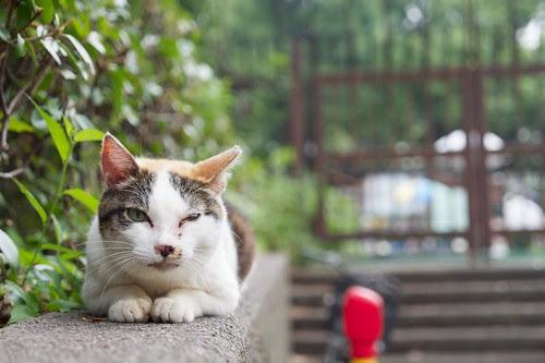 スカイツリーより猫