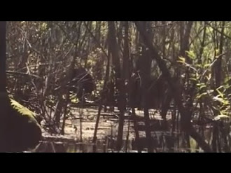 Bigfoot Caught on Tape in Lettuce Lake Park Florida / Pie Grande Captado en Video en Florida
