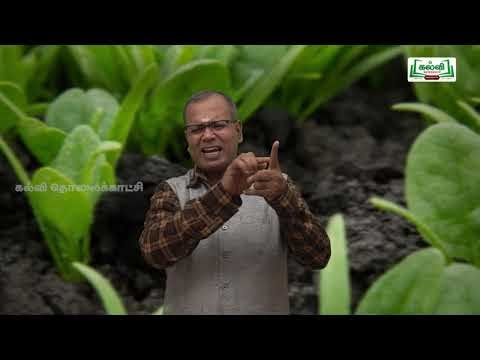 NEET Botany Vegetative Morphology Kalvi TV