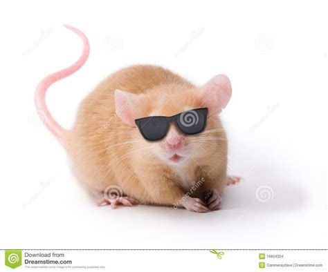 Blind Mouse With Sunglasses Stock Images   Image: 16804324