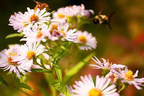 Flowers Under Attack