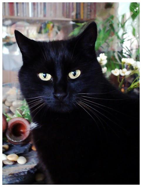 Black cat celebration-8