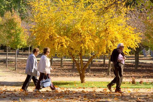 jardines de aranjuez en noviembre