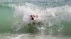 Cuidado con el agua del mar: puede ser muy perjudicial para la salud del perro