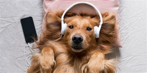 Which Sounds Reduce Stress The Best?   Good Vibes