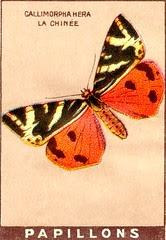 papill 17
