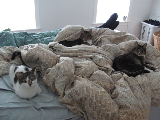 3 kitties on the bed.