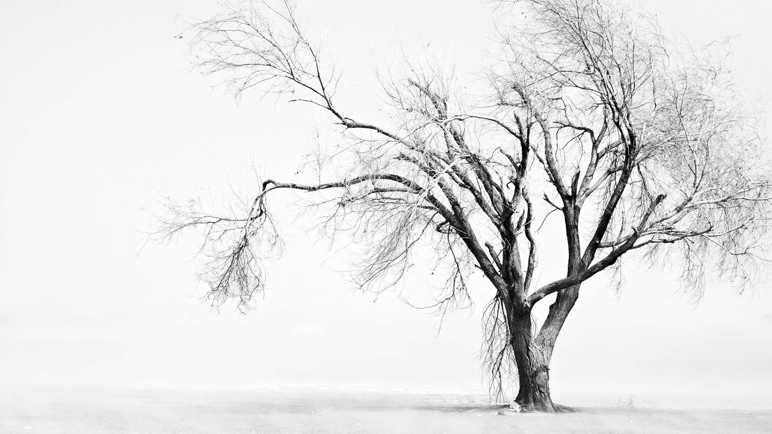 Black And White Tree 2560x1440 Wallpapers