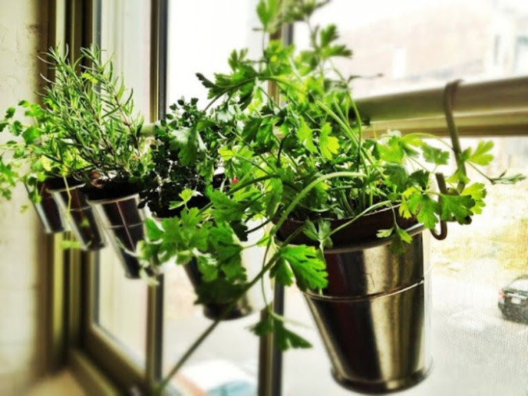 Small DIY Home Garden On Your Window Sill   Shelterness
