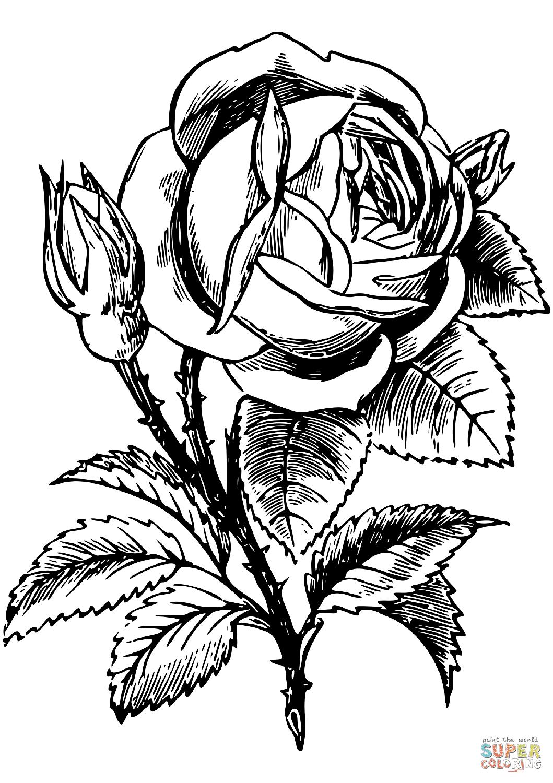 nieuw gratis kleurplaat zonnebloemen krijg duizenden