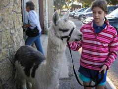 KnE alpaca