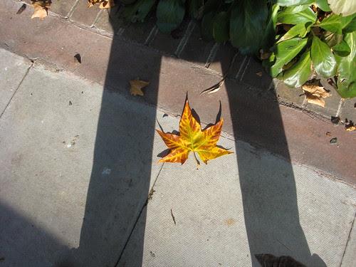 Fall and shadows-4