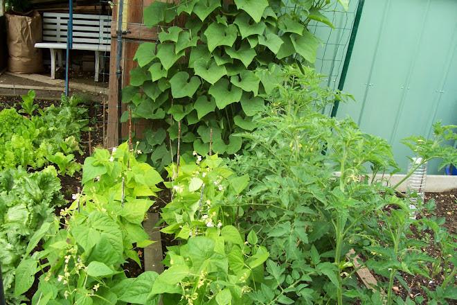 jardin 2007