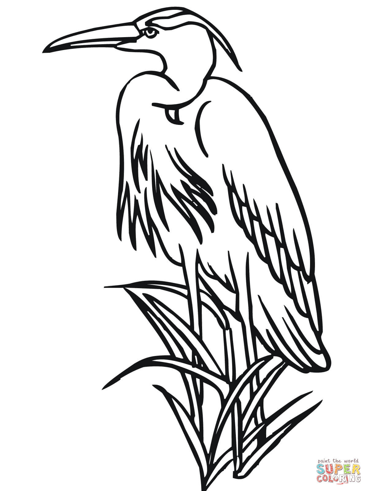 ausmalbild papageientaucher  cartoonbild