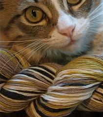 Artyarns Cashmere Sock Yarn