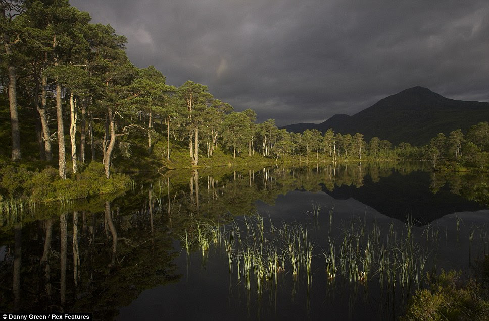 Trees reflected in Glen Affric lake in Scotland