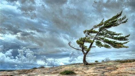 sons da natureza vento forte youtube