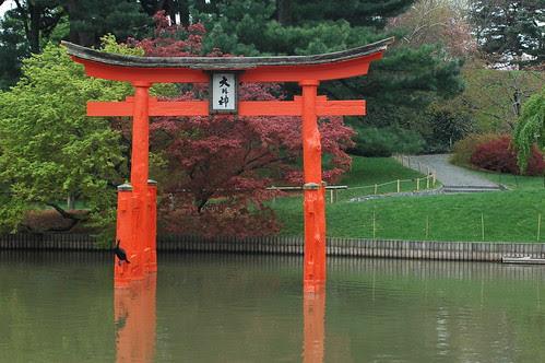 Cormorant, Torii, and Hillside in the Japanese Garden