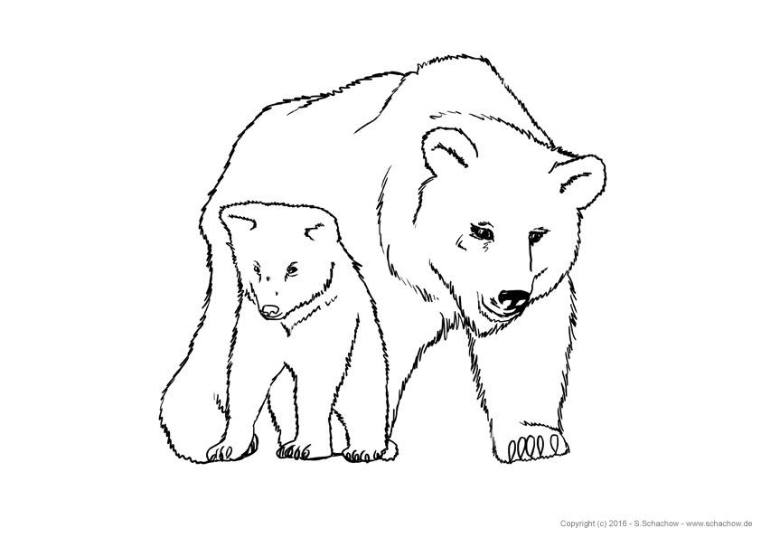 tierbilder zum malen  vorlagen zum ausmalen gratis ausdrucken