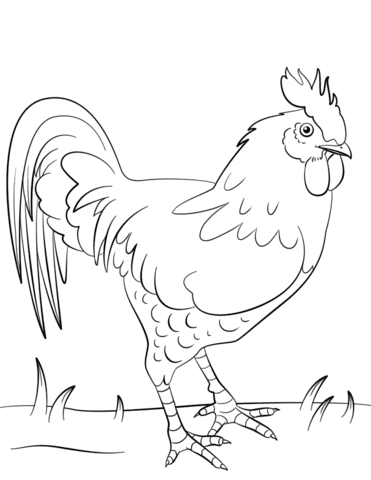 Rooster coloring page  Free Printable Coloring Pages