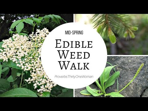 Mid-Spring Edible Weed Walk