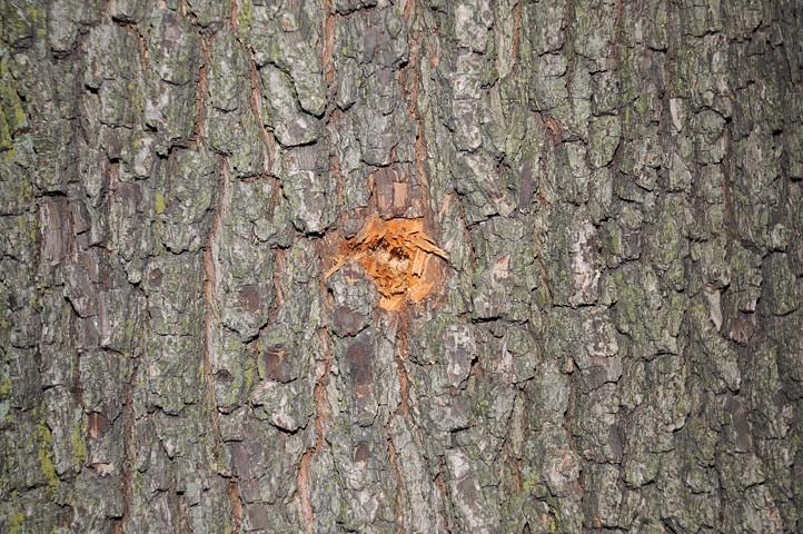 bullethole in tree_4771 web