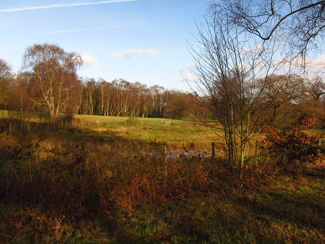 The Sphagnum Bog on the West Meadow