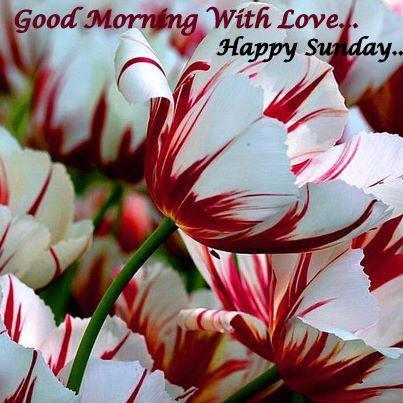 Good Morning Enjoy Sunday