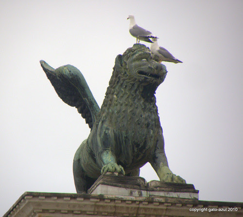 Venice - On The Irreverence Of Seagulls (St. Mark's Square)