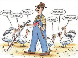 Thanksgiving turkey.  Funny but clean picture