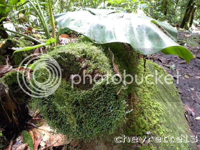 http://i1252.photobucket.com/albums/hh578/chevrette13/Guadeloupe/DSCN7487Copier_zps3ea3eb66.jpg